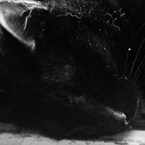 asleepcat_thumb